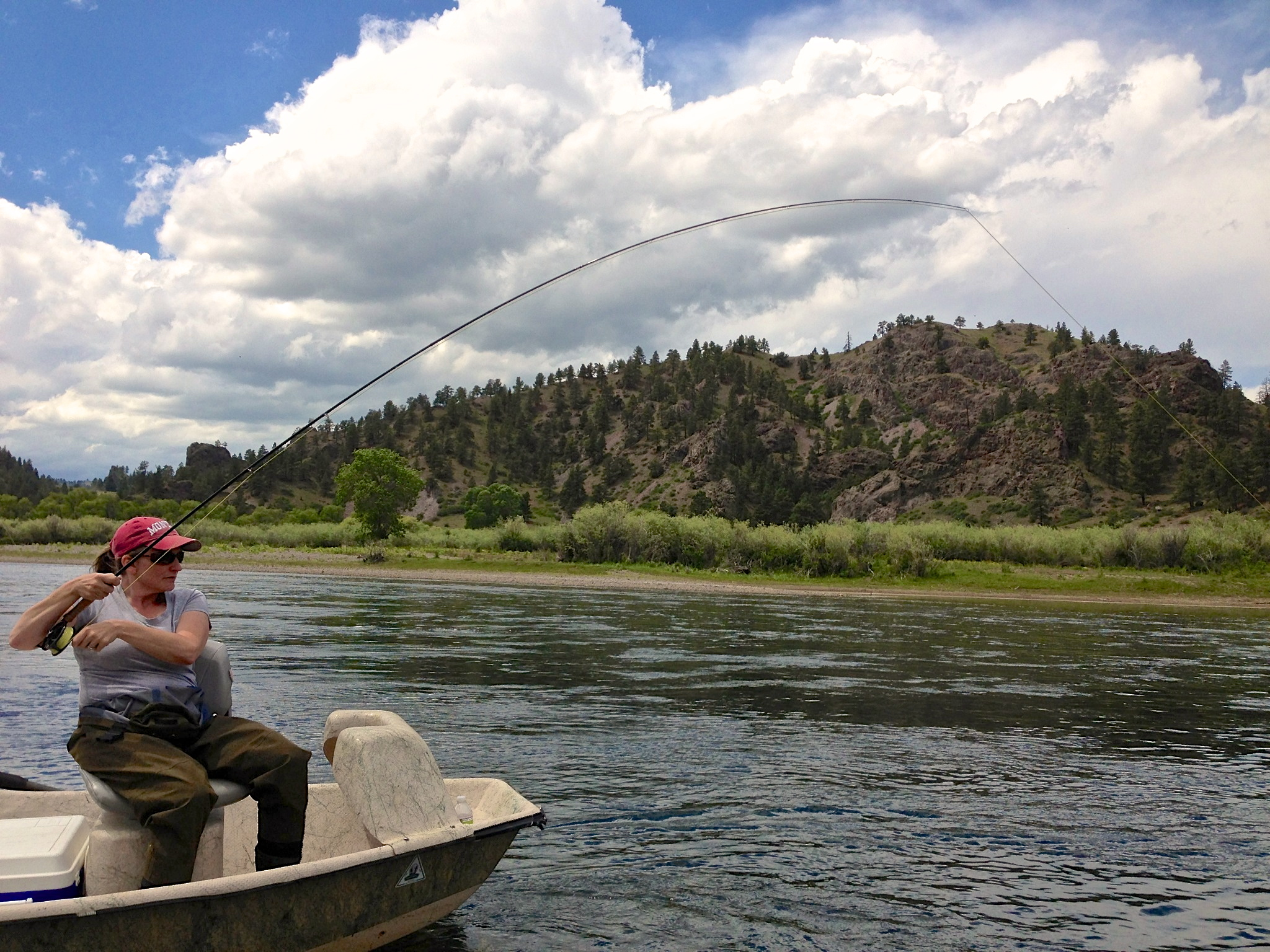 Missouri river fishing report 6 13 13 crosscurrents fly for Missouri river fishing