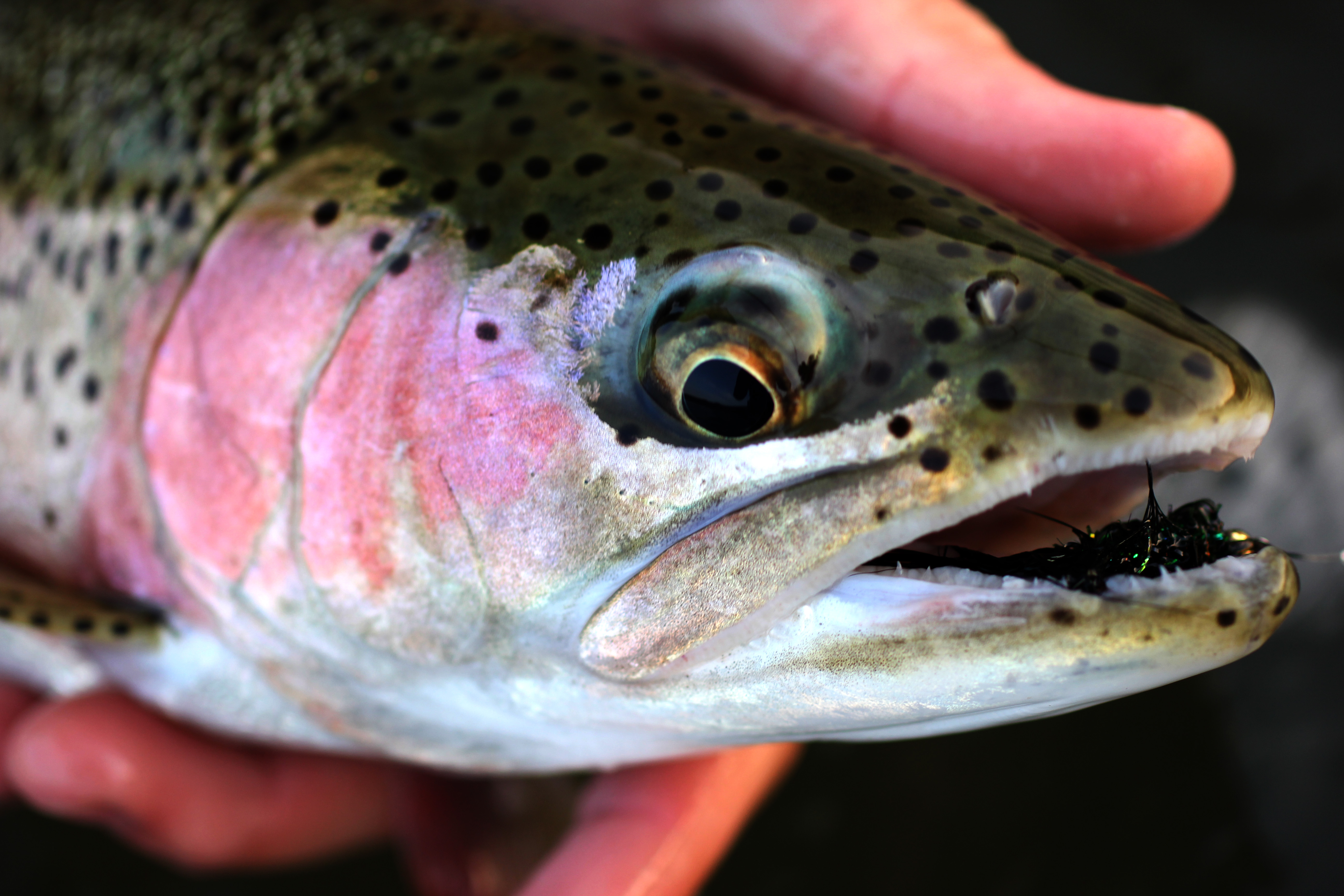 Learn With Crosscurrents Fly Shops Fly Fishing Schools Fly Tying