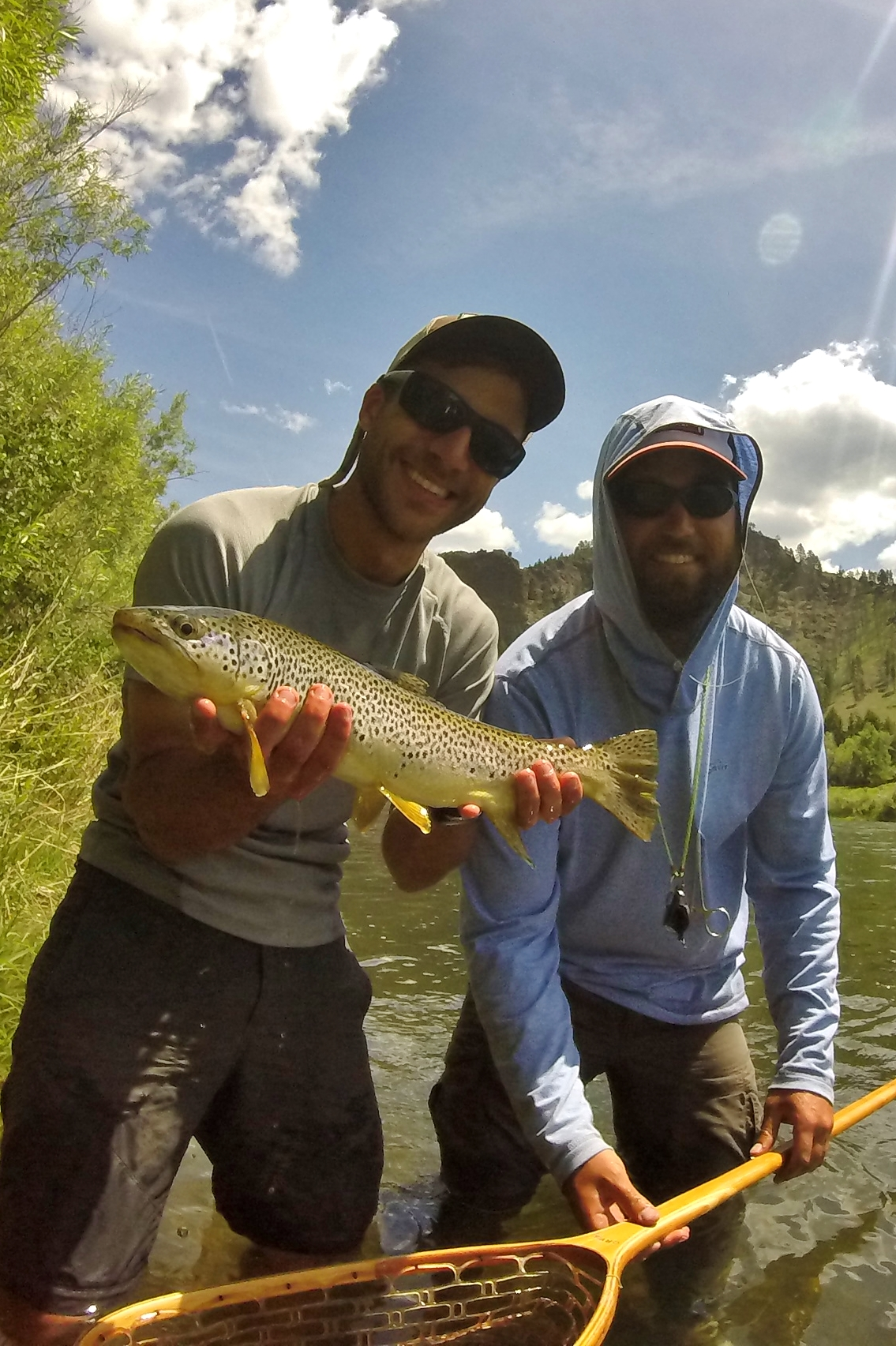 Brown Trout on Missouri River