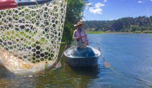 Net full of rainbow trout