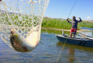 Full net of trout on Missouri River