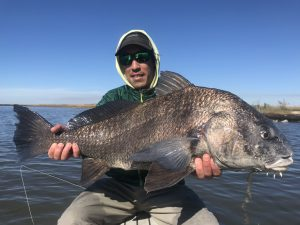 Louisiana Black Drum