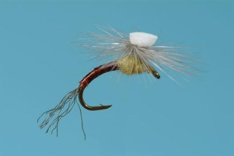 Sprout PMD Emerger