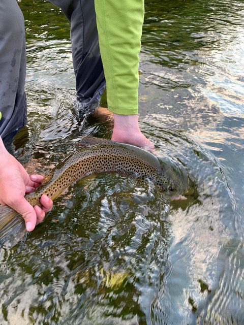 Missouri River hopper fishing